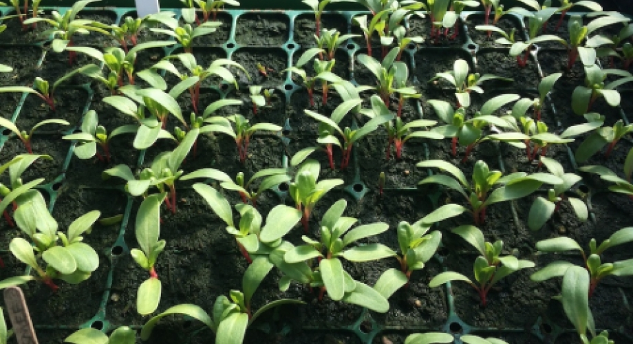 Sprouting Organic Crops